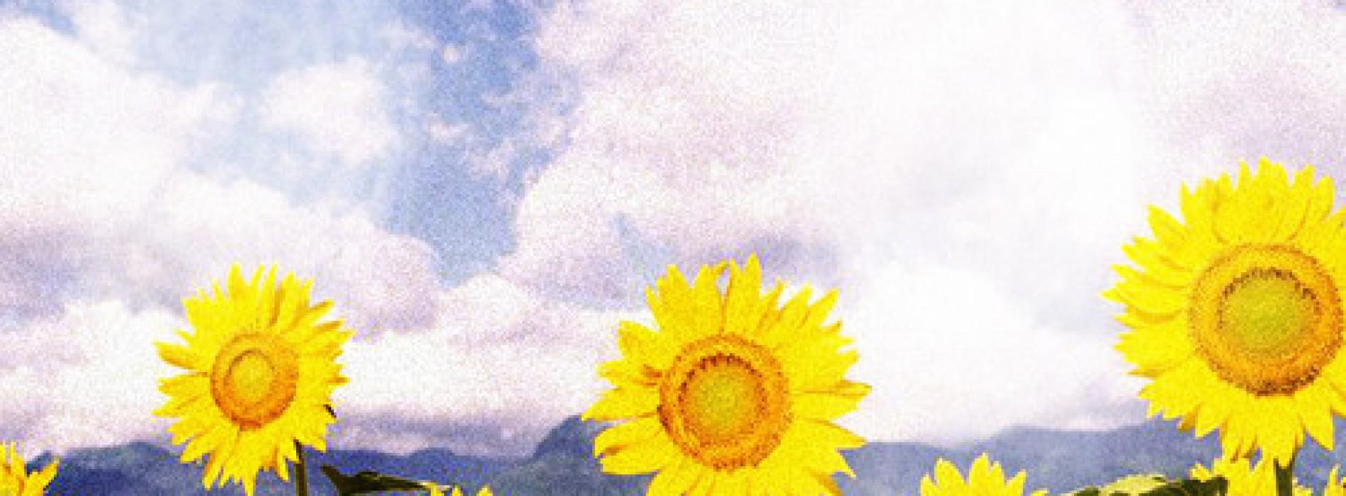 iClown-Sunflower