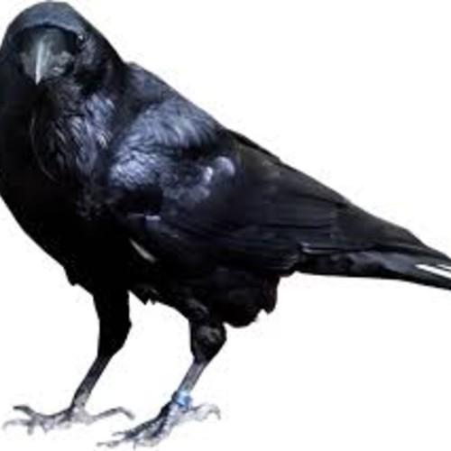 Dj Shiyam: Talking Raven (LQ Snipped)