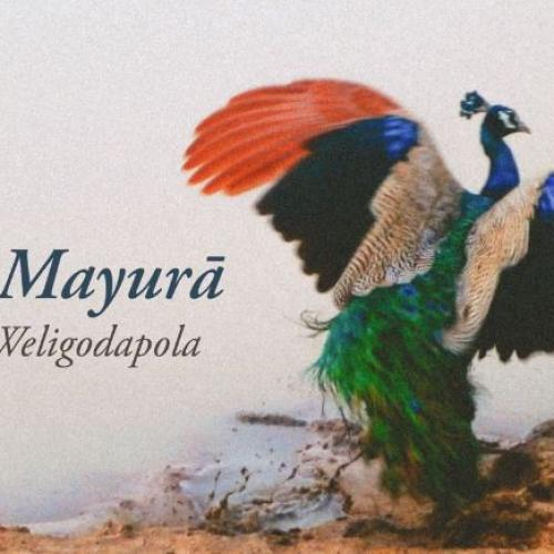New Music : Nadika Weligodapola – Rana Mayurā (Official Audio)