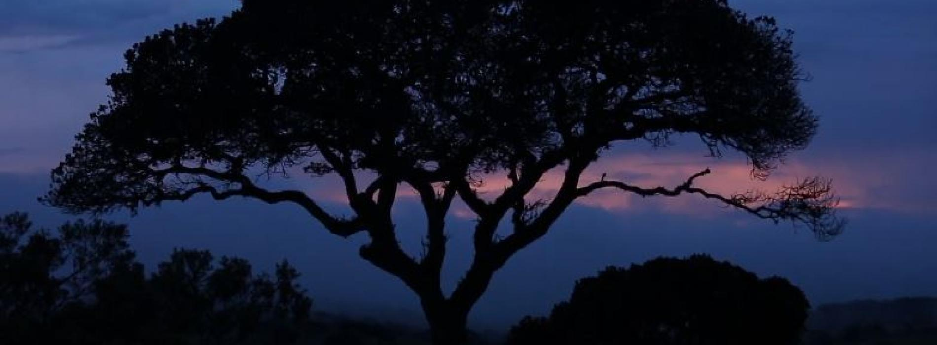 New Music : Sihina Bindina – Jayasri (Raahu Tele Drama Theme song)